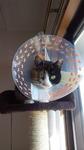 image/2012-12-06T19:52:17-1.jpg